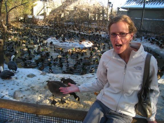 Insane amount of fowl inhabiting this pond.