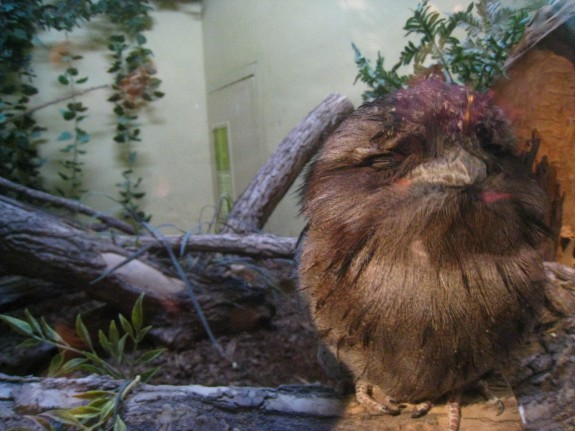This crazy bird totally reminded me of the creature that turns into a Gremlin!